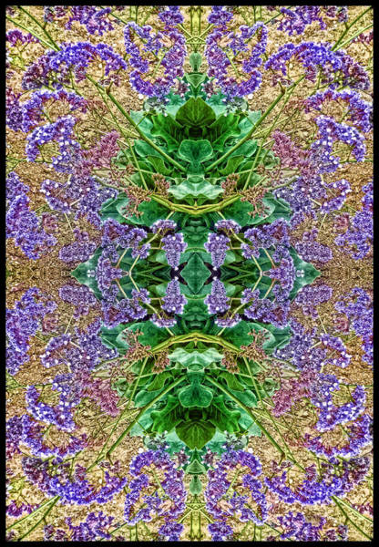 Photograph - Phyto-photo 7 by Douglas MooreZart