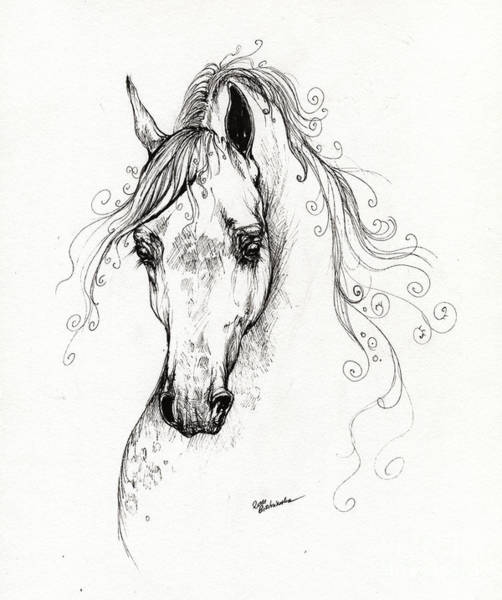 Arabian Drawing - Piaff Polish Arabian Horse Drawing by Angel Ciesniarska