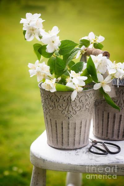 Metal Bucket Photograph - Picking Blossom by Amanda Elwell