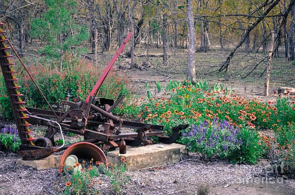 Pickle Creek Ranch Botanical Garden Art Print