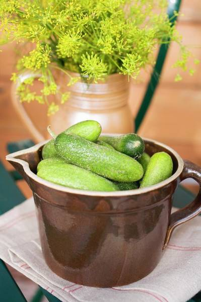 Cucurbits Photograph - Pickling Cucumbers And Fresh Dill In Jugs by Eising Studio - Food Photo and Video