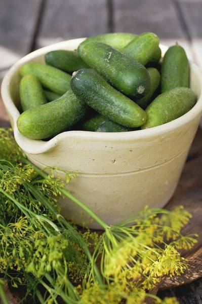 Cucurbits Photograph - Pickling Cucumbers In Bowl, Fresh Dill Beside It by Foodcollection