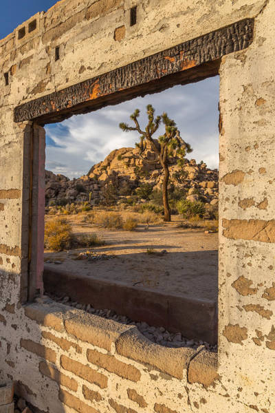 Desert Plant Photograph - Picture Window by Peter Tellone