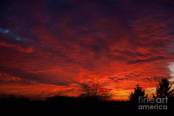 Expanse Photograph - red sunset and trees silhouette in Warsaw  by Arletta Cwalina