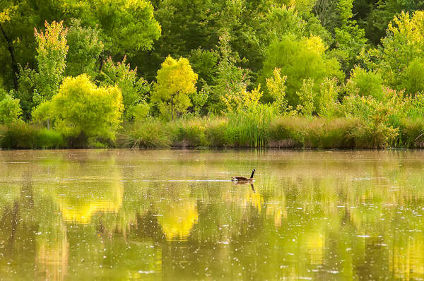 Photograph - Picturesque View Of A Goose On A Lake by Alex Grichenko