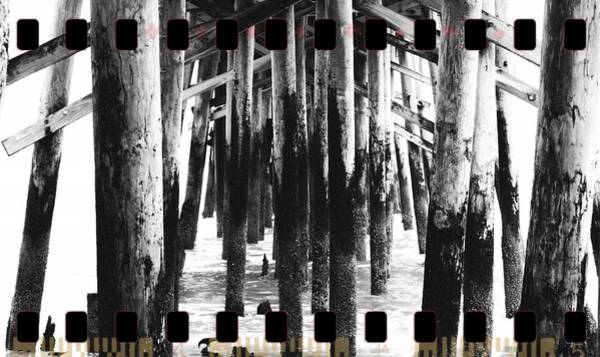 Flagler Beach Photograph - Pier Pilings Black And White by Alice Gipson