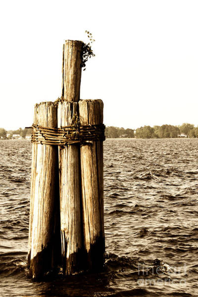 Photograph - Pier Pilings by Jill Lang