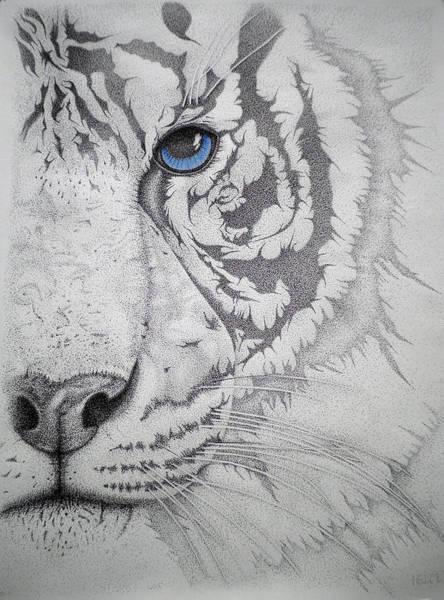 Bengal Tiger Drawing - Piercing II by Mayhem Mediums