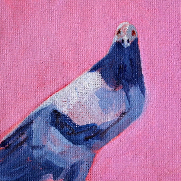 Wall Art - Painting - Pigeon On Pink by Nancy Merkle