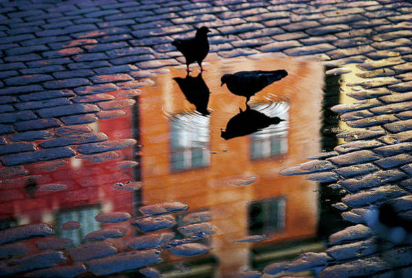 Pair Photograph - Pigeons by Allan Wallberg