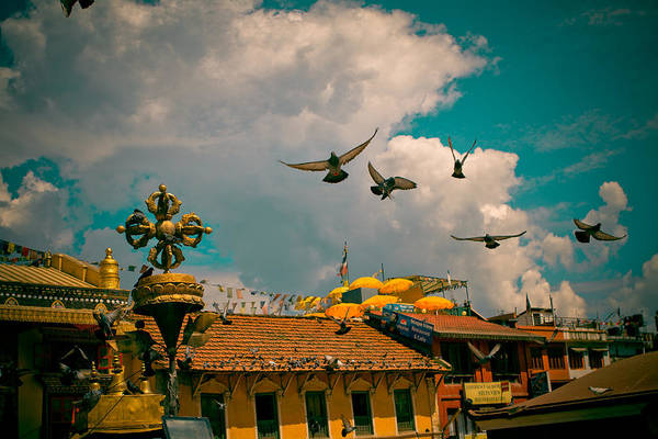 Photograph - Pigeons Near Monastery In Boudnath Kathmandu by Raimond Klavins