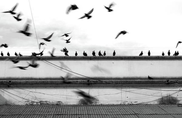 Perpetual Photograph - Pigeons On The Roof And Flying by Magaiza