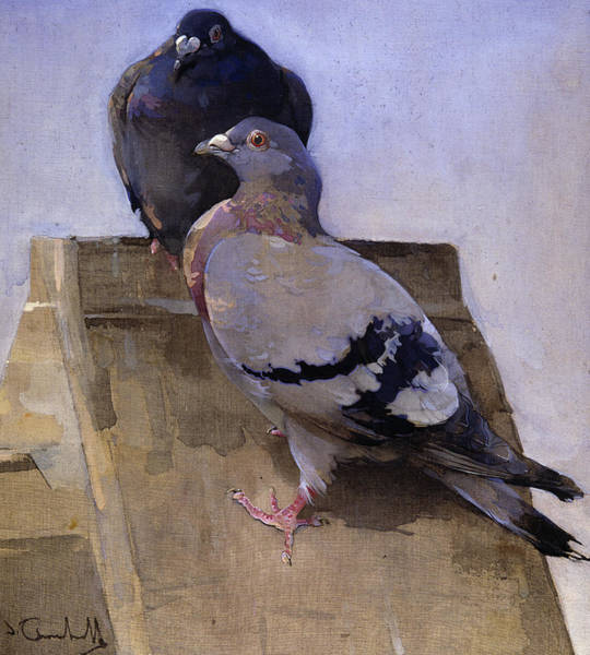 Wall Art - Painting - Pigeons On The Roof by Joseph Crawhall
