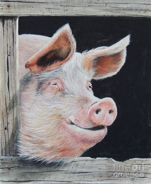 Painting - Piggy.  Sold  by Sandy Brindle