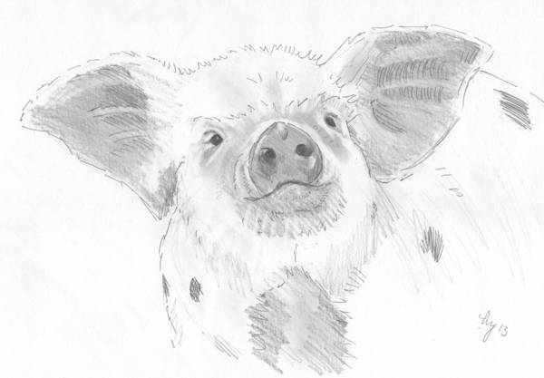 Drawing - Piglet   by Mike Jory