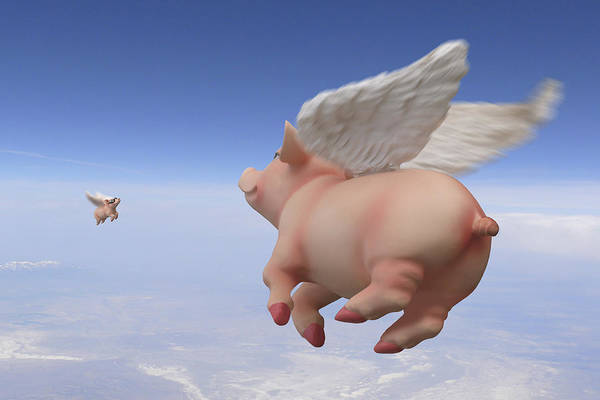 Pig Photograph - Pigs Fly 2 by Mike McGlothlen