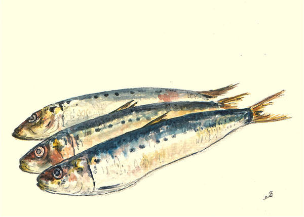 Fish Painting - Pilchards by Juan  Bosco