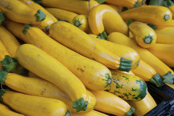 Yellow Photograph - Pile Of Organic Squash At Farmers Market by Roy Hsu