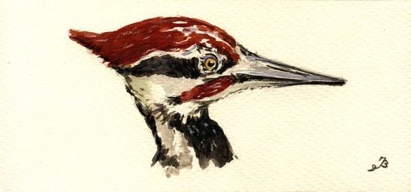 North American Wildlife Wall Art - Painting - Pileated Woodpecker Head Study by Juan  Bosco