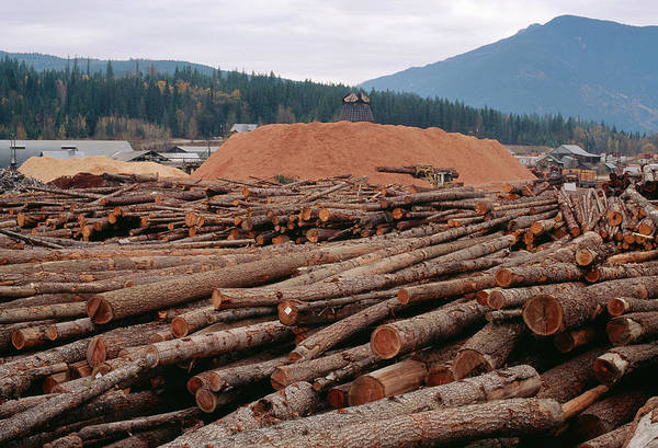 Forestry Photograph - Piles Of Logs And Sawdust At A Sawmill by David Nunuk/science Photo Library