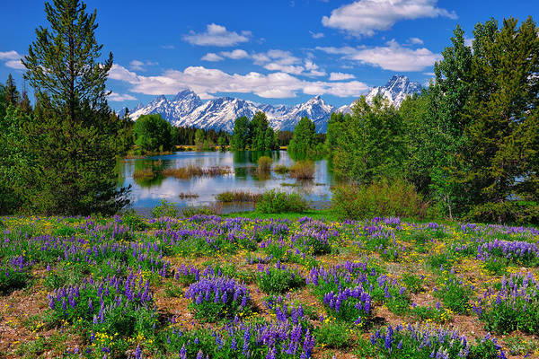Art Print featuring the photograph Pilgrim Creek Wildflowers by Greg Norrell