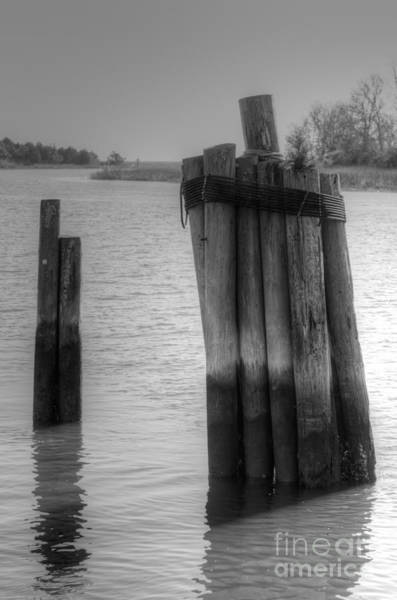Photograph - Pilings On The Creek by Dale Powell