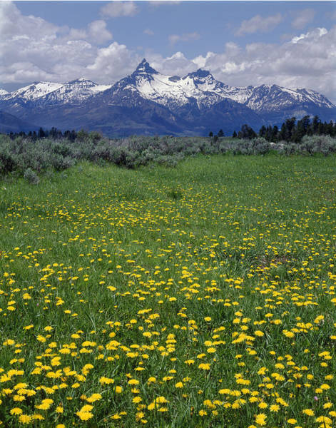 Photograph - 1a9210-pilot Peak And Wildflowers by Ed  Cooper Photography