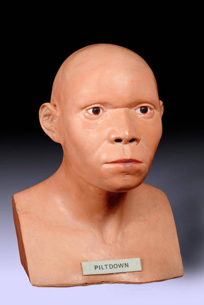 Fake Photograph - Piltdown Man Reconstruction by Natural History Museum, London/science Photo Library