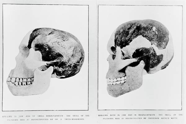 Wall Art - Photograph - Piltdown Man Reconstructions by Natural History Museum, London/science Photo Library