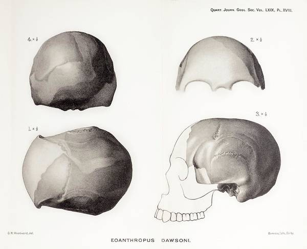 Fraud Photograph - Piltdown Man Skull by Paul D Stewart