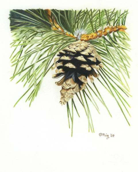 Drawing - Pincone by Rosellen Westerhoff