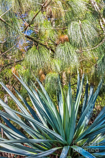 Photograph - Pine And Succulent by Kate Brown
