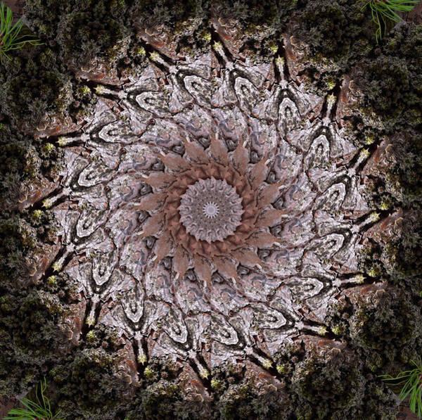 Pine Bark Mandala #1 Art Print