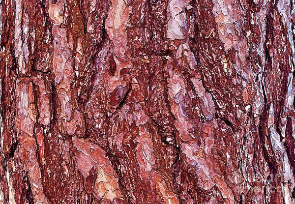 Photograph - Pine Bark Texture by Les Palenik