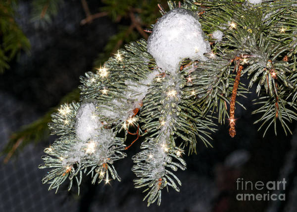 Photograph - Pine Branch With Ice And Stars by Les Palenik