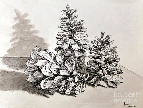 Drawing - Pine Cone Trio by Art By - Ti   Tolpo Bader