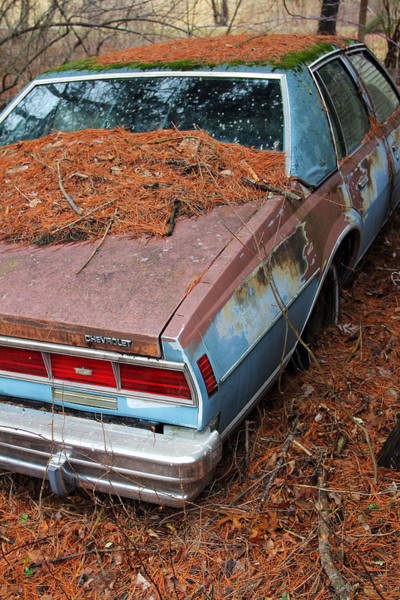 Photograph - Pine Covered Chevy by Jennifer Robin