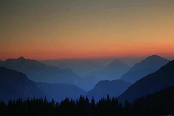 Friuli Photograph - Pine Forest And Mountains At Twilight by Max Paoli