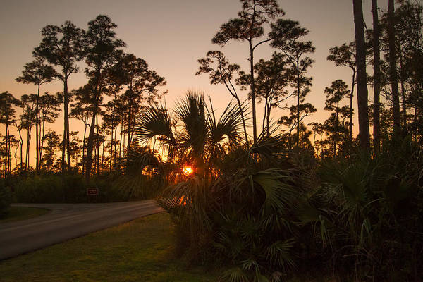 Photograph - Pine Glades Sunset by Doug McPherson