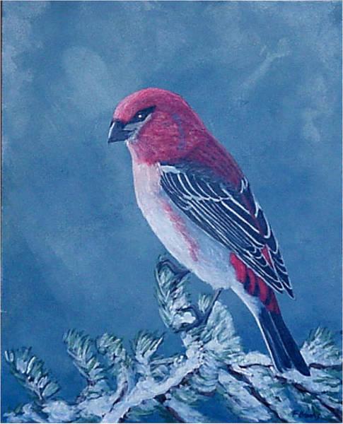 Pine Grosbeak Art Print