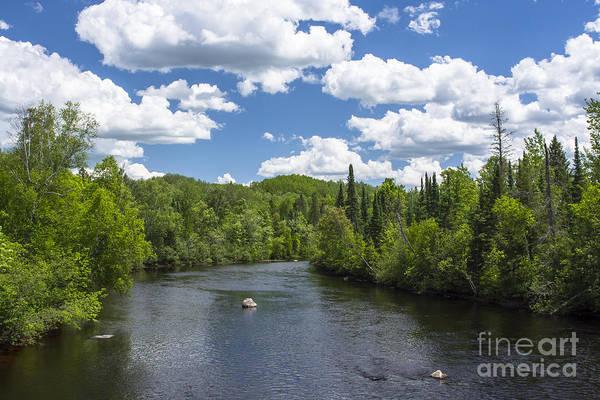 Pine River Art Print