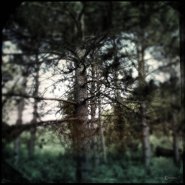 Photograph - Pine by Tim Nyberg