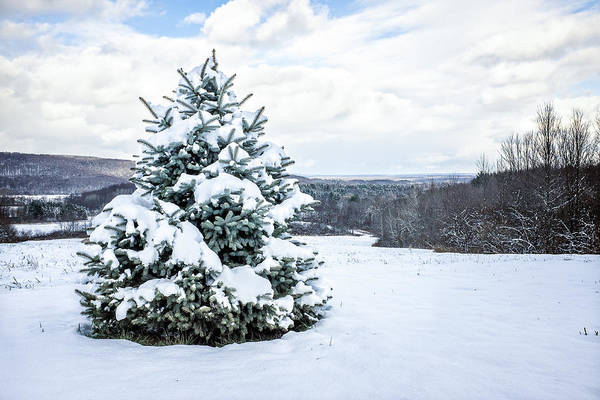 Photograph - Pine Tree Under Snow by Chris Bordeleau