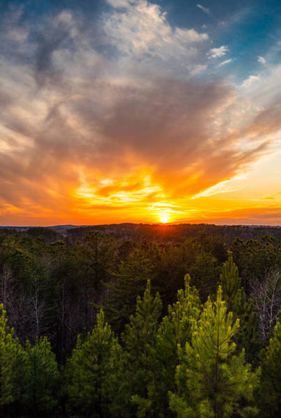 Alabaster Photograph - Pine Trees At Sunset by Parker Cunningham