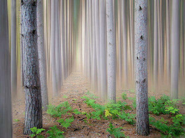Pine Tree Photograph - Pine Trees In Fog by Charles Bonham Photography