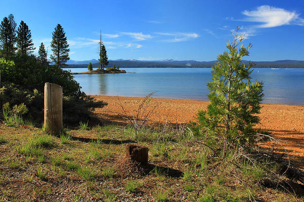 Photograph - Pine Trees In Lake Almanor by James Eddy