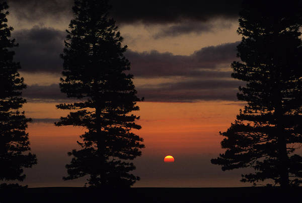 Lanai Photograph - Pine Trees Silhouetted At Sunset by Arthur Meyerson