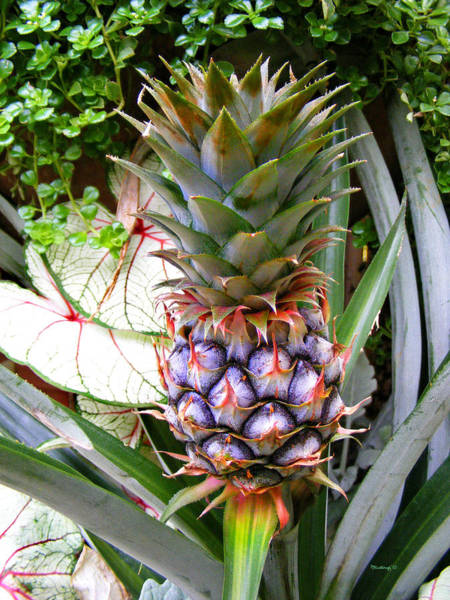 Photograph - Pineapple 2 by Duane McCullough