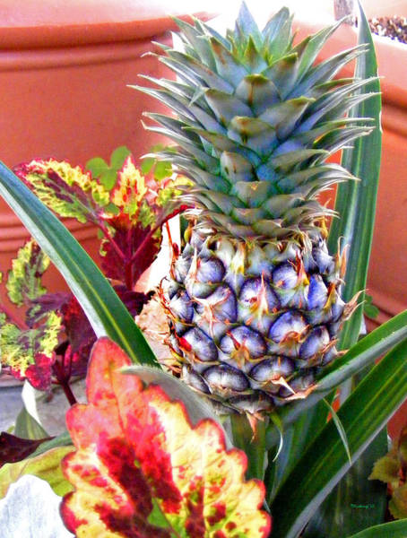 Photograph - Pineapple by Duane McCullough