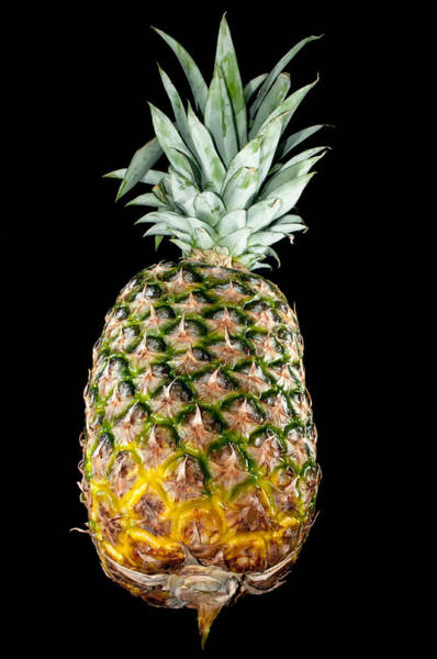 Photograph - Pineapple Isolated On Black by Alex Grichenko